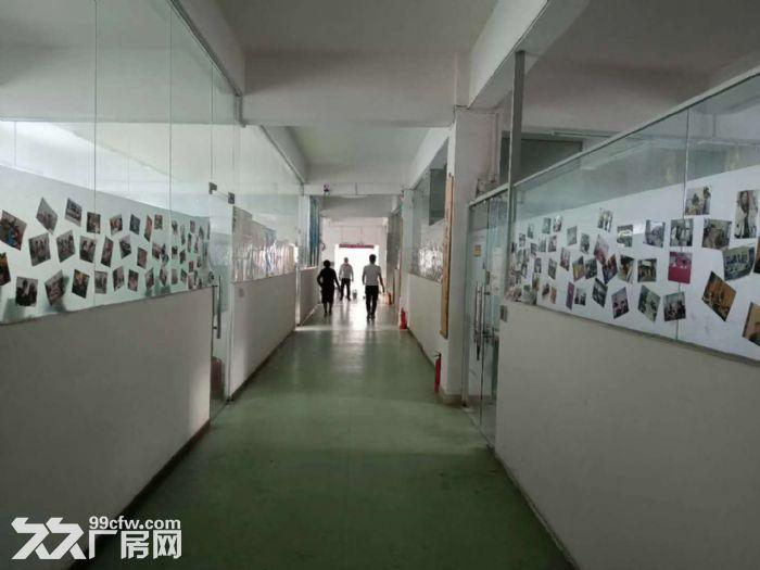 面积实在!凤岗凤德岭独栋两层1400平厂房出租有水电办公室-图(3)