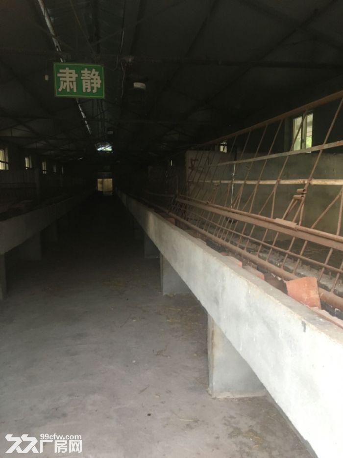 绵阳市游仙区聚农农场出租出售-图(2)
