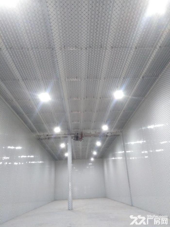 新建大型冷库出租价格优惠-图(3)