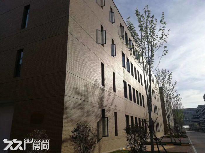 红岛胶州城阳王台项目厂房助力西海岸经济技术开发区厂房带证1200平-图(4)