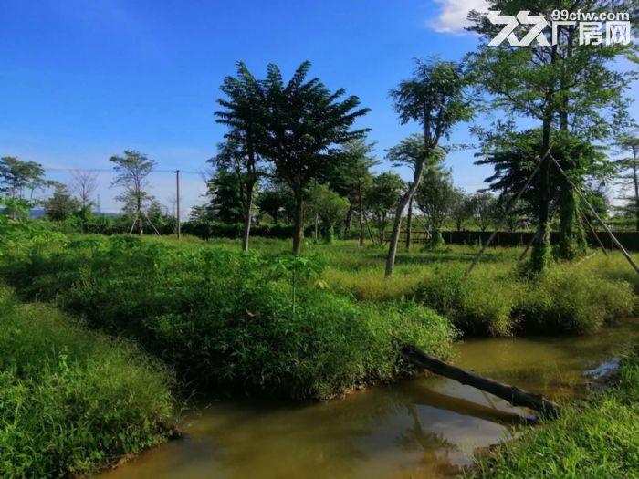 南海30亩农用土地出租交通方便,主路大,环境好,近江-图(1)