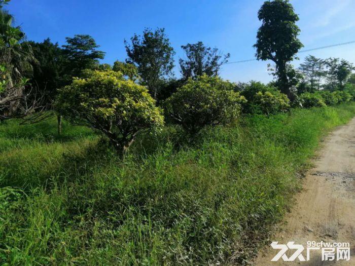 南海30亩农用土地出租交通方便,主路大,环境好,近江-图(5)