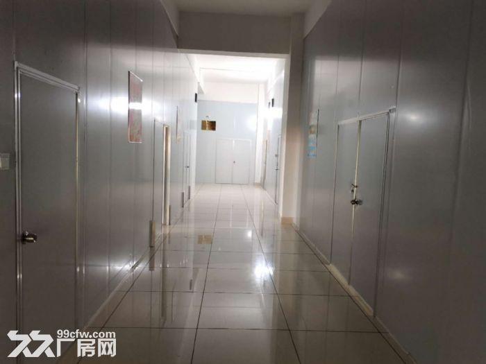 1300平方米精装修食品厂房,已经隔好彩钢板装好水电等-图(5)