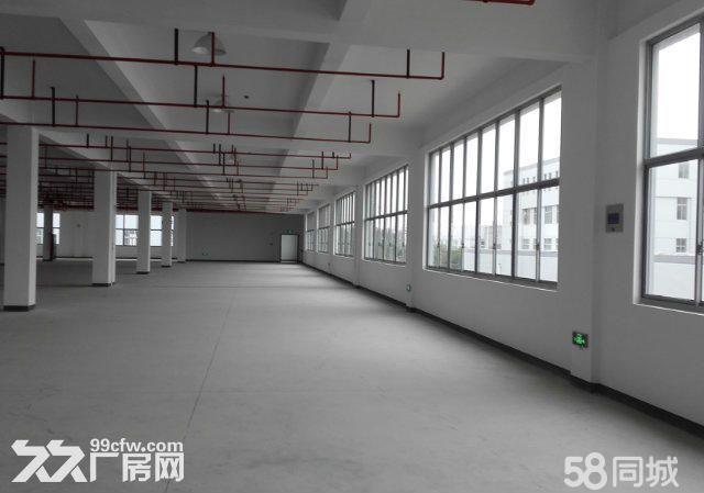 个人.上坊一楼1000平米,一栋2500平米仓库出租-图(5)