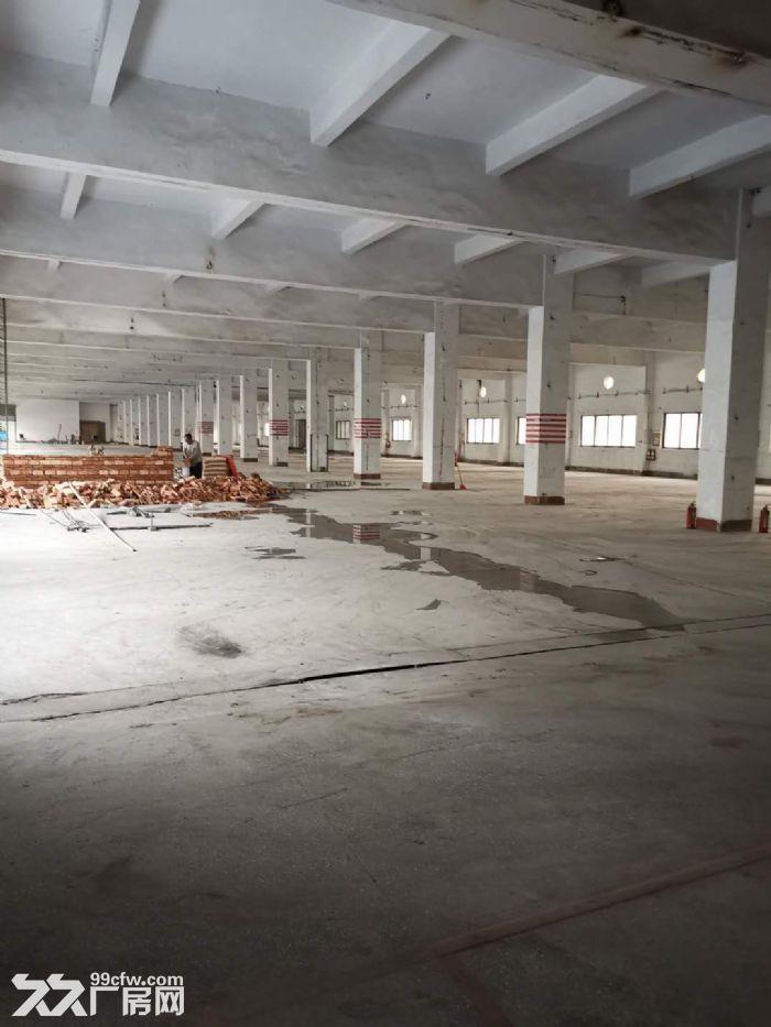 桂城平洲16000平方红本楼层仓库出租,适合电商、家电、中转、食品、快消等行业-图(3)
