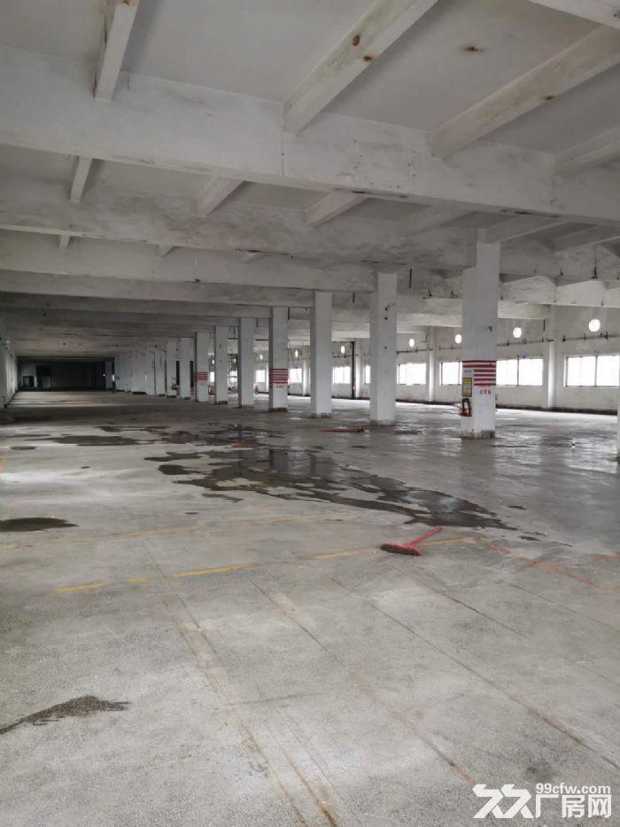 桂城平洲16000平方红本楼层仓库出租,适合电商、家电、中转、食品、快消等行业-图(5)
